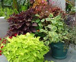 Most of these pots have just one type of plant per container.