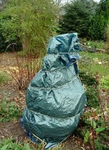 A fig tree is wrapped in a leaf-insulated tarp for winter protection.