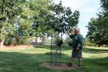 Bill Kieffer checks the progress of one of the new chestnut trees planted at Hershey Gardens.
