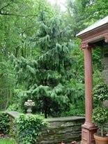 Weeping Alaska-cedar is a winner of a 2015 Gold Medal Award.