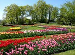 Hershey Gardens will be awash with 30,000 blooming tulips next month.
