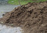 """Mulch that's been sitting for a long time can become """"sour"""" and harmful to plants."""