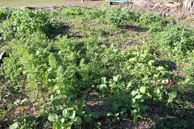 Weed Rogue's Gallery: The 14 worst weeds invading our yards