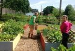 Ellen Crist, left, and Shawna Murphy harvest vegetables from Green Urban Initiative's Atlas Street Garden.
