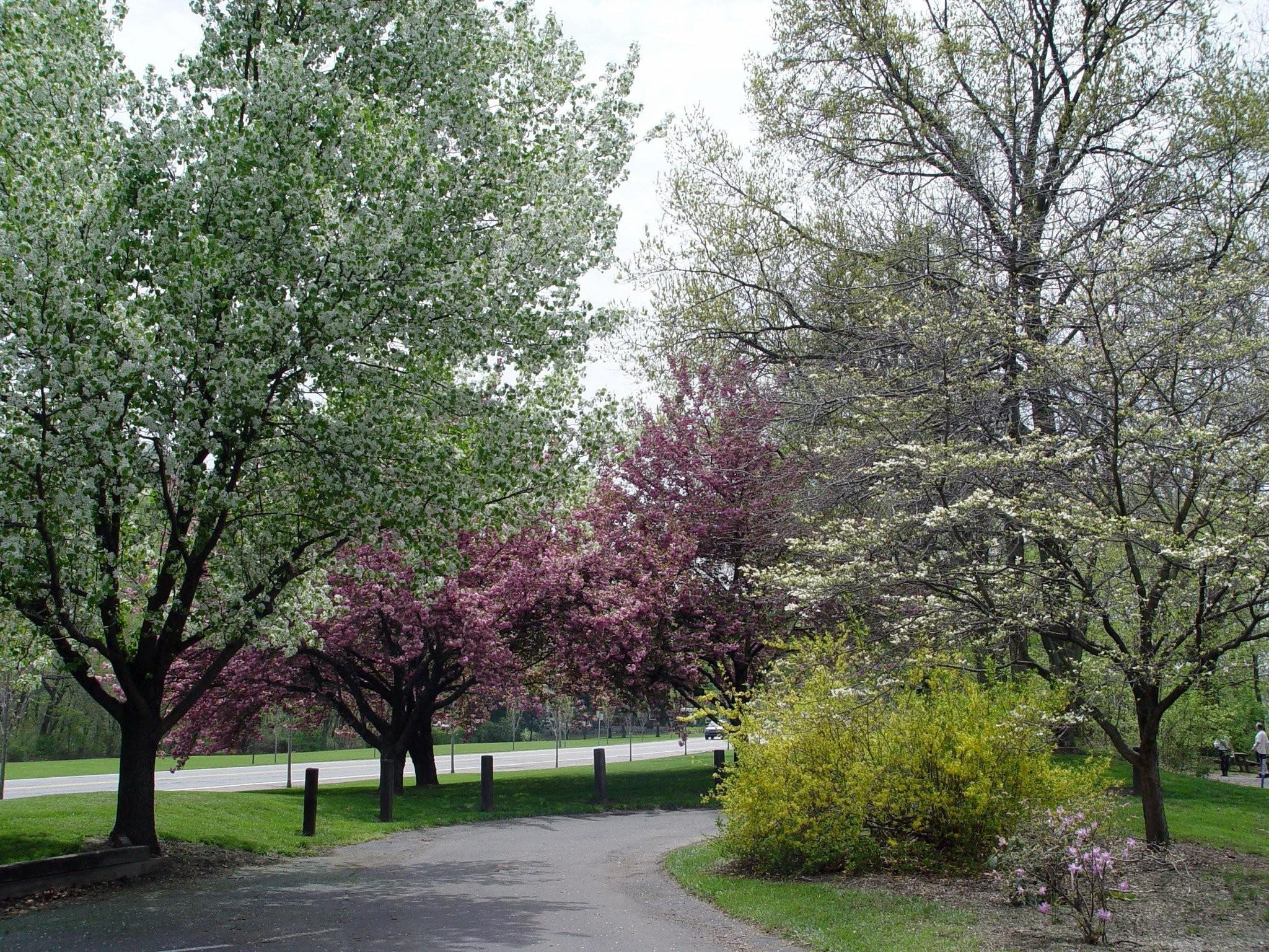 10 Native Trees That Make Excellent Landscape Choices Pennlive Com