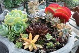 New interest in succulent plants is showing no signs of abating.