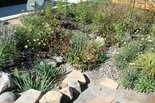 Rain gardens offer a trendy way to use plants to solve storm-water runoff problems.