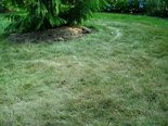 When lawns start to brown like this in summer, they're trying to naturally conserve water by going dormant.