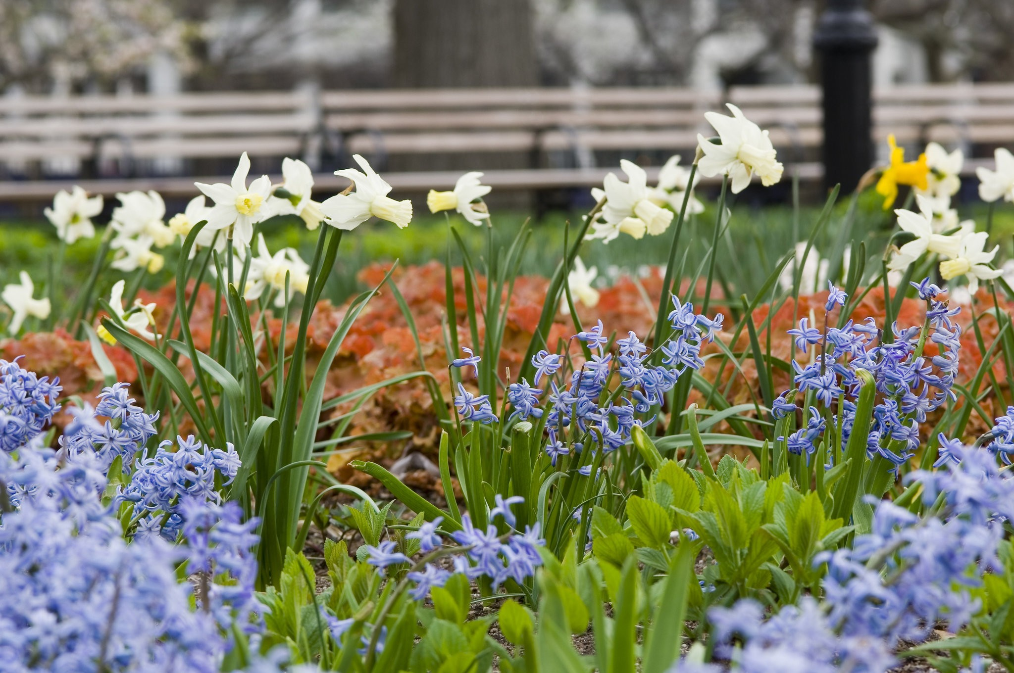 12 Durable Spring Bulbs You Might Want To Try Instead Of Tulips