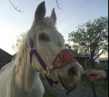 Lily sports a new custom-made halter.
