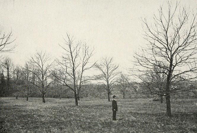 A chestnut orchard in Philadelphia circa 1900.