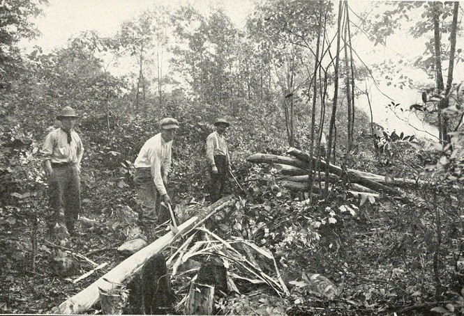 Members of the Pennsylvania Chestnut Blight Commission with trees felled in an attempt to stop the blights progression in the state.