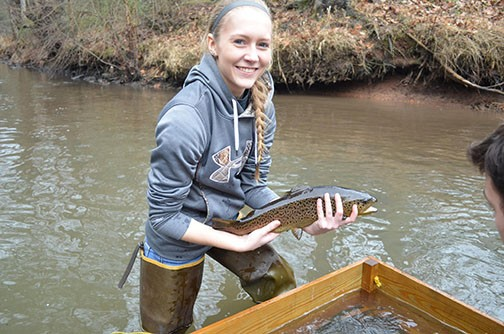 Where can you find the most trophy trout in Pennsylvania