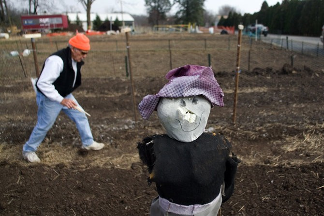 Ralph Klinepeter, 79, of Camp Hill walks his garden plot after planting snow peas at the Camp Hill Community Gardens. PAUL CHAPLIN, The Patriot-News