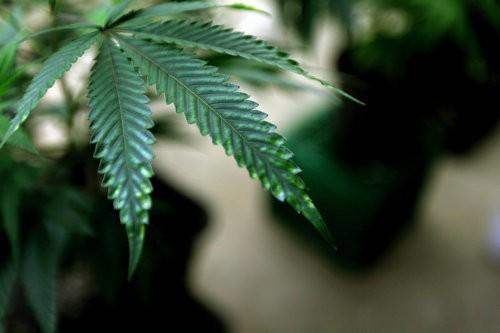 Keystone Kush, wax and shatter: Here's what medical marijuana
