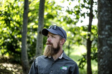 Steve Hoy is the orchard manager at the chestnut research orchard at Penn State. American chestnut tree blight resistance breeding at the chestnut research orchard in the Arboretum at Penn State University, September 11, 2017.