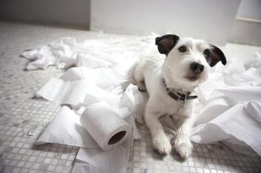 Toilet paper is extremely appealing to mischievous young pups