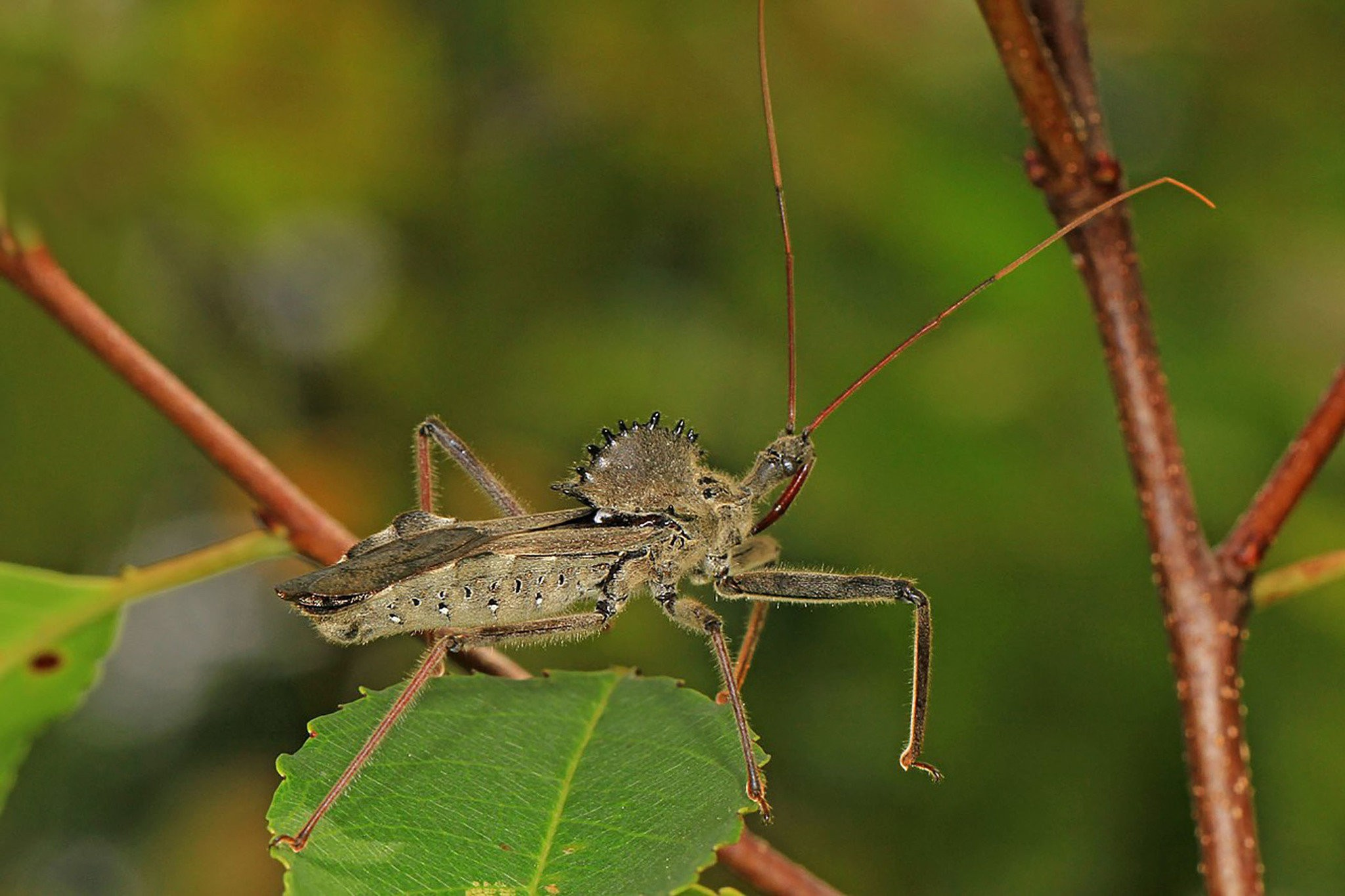 15 Common Bugs In Your Backyard That Will Freak You Out Pennlive Com