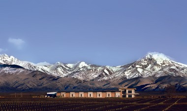 Looking back toward the Domaine Bousquet campus and the Andes Mountains.