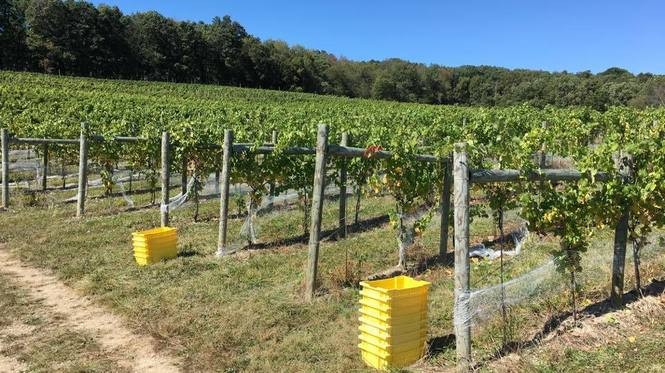 There are 10 acres of vines planted at Briar Valley in Bedford, Pennsylvania, a couple hours west of Harrisburg and about a 30-minute drive east from the Flight 93 National Memorial.