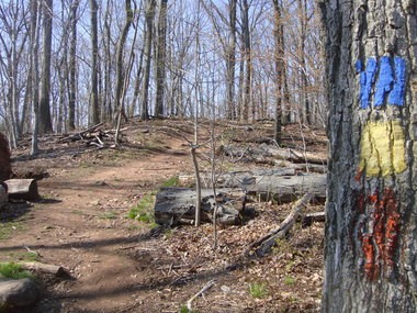 The Greenbelt's many miles of trails are in good shape for the High Rock Challenge this weekend, but beware of fallen trees and logs nearby. Some 500 teams have registered for the 10K event; there will be a staggered start beginning at 8 a.m.