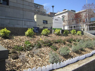 """Last year, young people began weeding and general maintenance of the flower bed located directly in front of the 120th Police Precinct in St. George. They will complete the project this year, after being awarded a """"Love Your Block"""" grant. Staten Island Advance"""