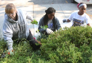 Patti Newman, Taliima Smith 16, and Mala England 16, both Curtis HS students as they pull the weeds out from the bushes in from the 120 Pct. (Staten Island Advance/Hilton Flores)