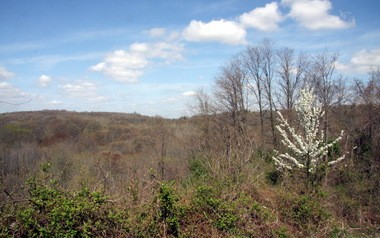 Above the tree line at the top of Moses Mountain. The mountain can be accessed via a trail near the intersection of Manor Road and Rockland Avenue, Sea view. (Staten Island Advance/Irving Silverstein)