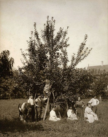 An idyllic scene in Keiber Farm's orchard in Westerleigh. (Courtesy of Westerleigh Improvement Society)