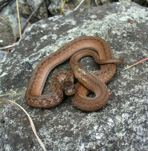 Staten Island nature: Six snakes found on this borough