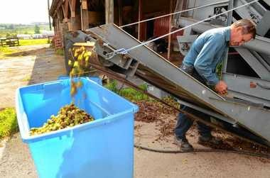 In this 2011 file photo, Northeast Hop Alliance President Larry Fisher processes hops using a Wolf Harvester at Morrisvile State College. This machine is similar to the one recently purchased by The Bineyard in Cazenovia.