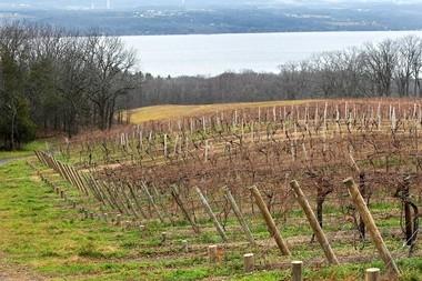 Grape vines overlooking the shore of Seneca Lake at Wagner Vineyards in Lodi.