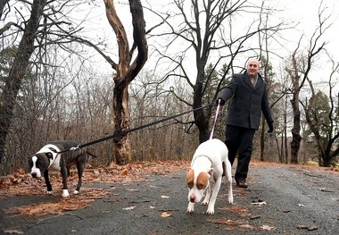 Lawyer Nick DeMartino walks his dogs Domino and Tyra in Syracuse, Wednesday January 4, 2017. They are rescue dogs, but not part of the volunteer lawyers project. Dennis Nett | dnett@syracuse.com