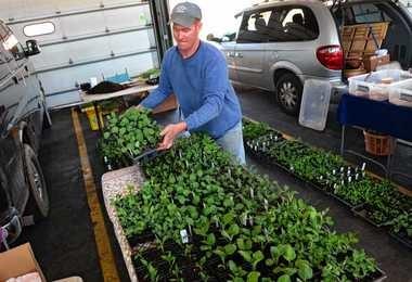 Jamie Edelstein of Wyllie Fox farm in Cato is selling lots of seedlings at the regional market, including 40 varieties of heirloom tomatoes.