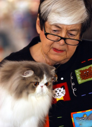 A purrfect return: Cat show to be held at NYS Fairgrounds