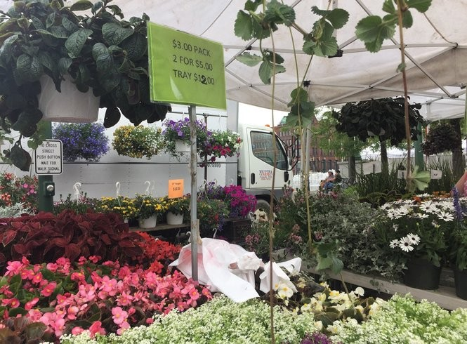 Nicotra Farms in Kirkville has been selling flowers, fruits and vegetables at the Downtown Farmers Market since the market began 45 years ago.