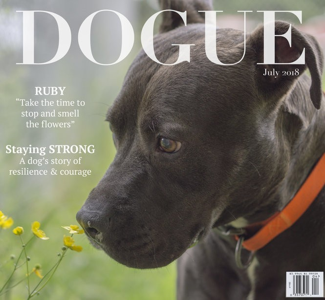 INTERVIEW WITH A SHELTER DOG - syracuse com