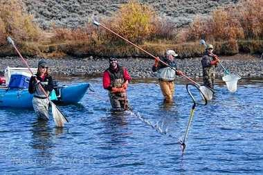 Maegan Spindler electrofishing on Green River in Wyoming with her colleagues.