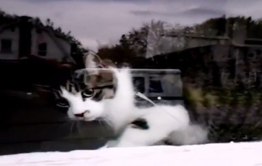 """A cat video by a Baldwinsville postal worker won $10,000 on """"America's Funniest Home Videos."""""""