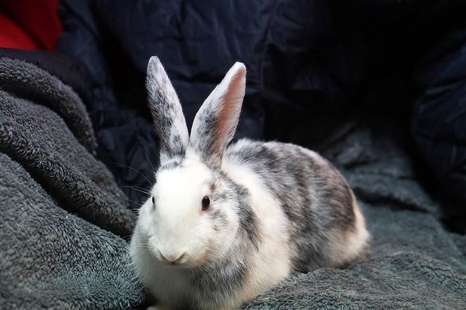 Sarge was adopted to pair with his owner's female rabbit Petal. The bonding took almost two years.