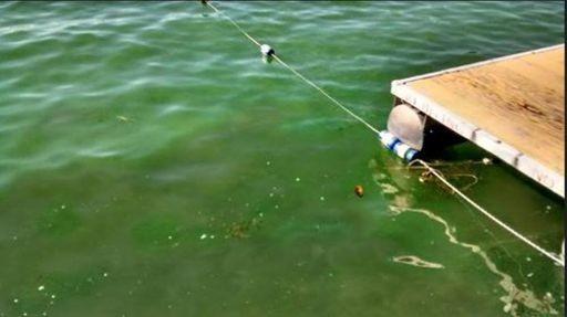 Algae floats on Skaneateles Lake in this Aug. 6 file photo.