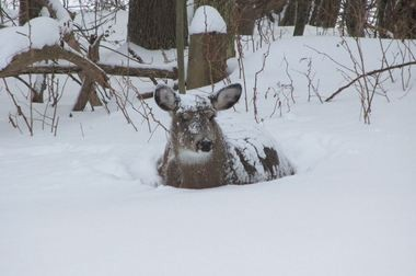 This photo of Bella, which was taken last winter, is on her Facebook page.