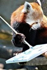 A painting by a red panda will be part of the silent auction at Brew at the Zoo & Dinos, Too!