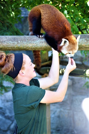Red panda keeper chat is at 2:30 p.m. daily