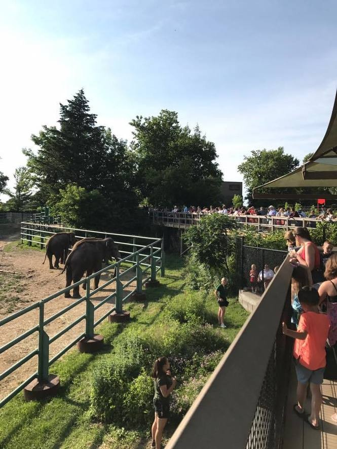 An elephant demonstration at the zoo's Asian Elephant Preserve